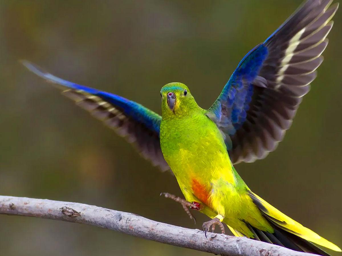 rarest birds in the world