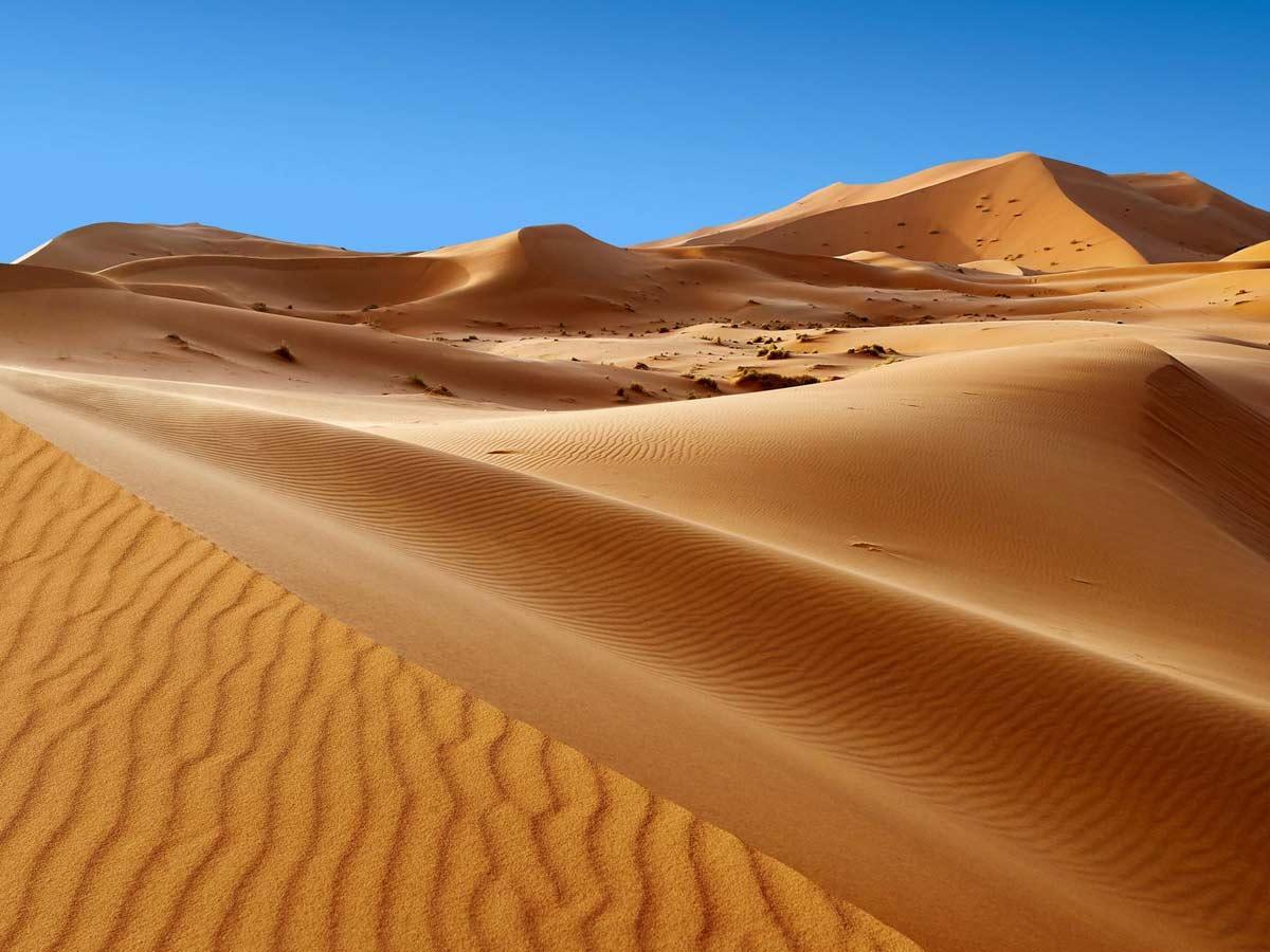 plants in the desert