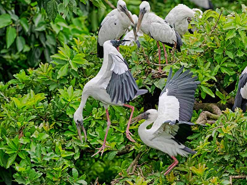 Kulik Bird Sanctuary