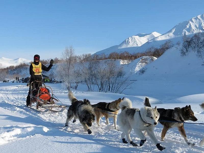 dog slegh in Svalbard