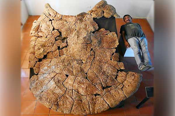 Fossils of 1 ton fighting turtle found in South America