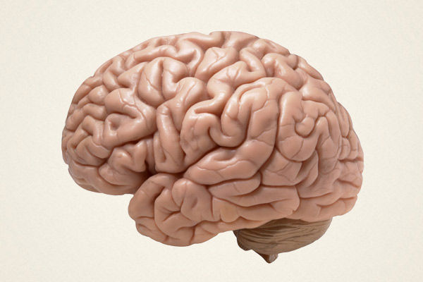 Can coronavirus attack the human brain Know what scientists say