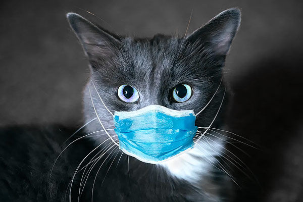 2 cats in New York first US pets to test positive for coronavirus