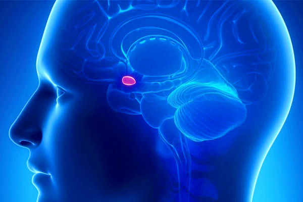 IIT-Guwahati finds new ways to prevent memory loss due to Alzheimer disease