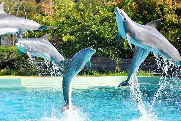 After witnessing success of Project Tiger and Project Elephant India now launches Project Dolphin