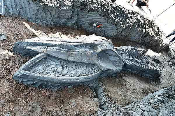 39-foot leviathan discovered