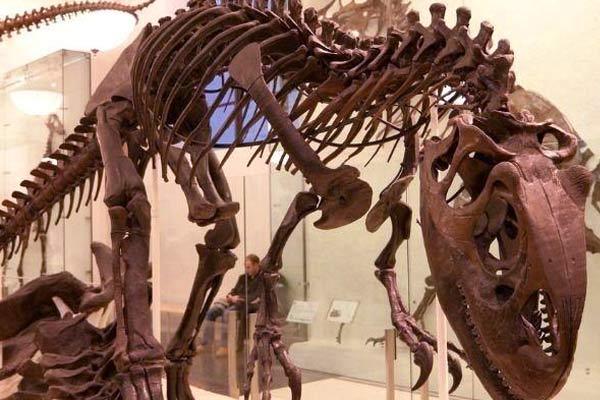 Scientists recreate dinosaur brain