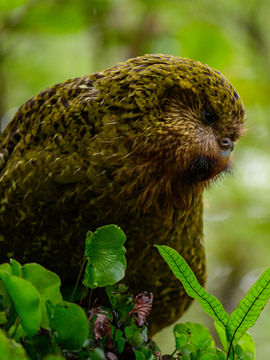 The rarest birds in the world