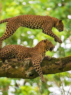7 Most Beautiful Wildlife Sanctuaries in India