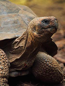 5 Animals With The Longest Lifespan