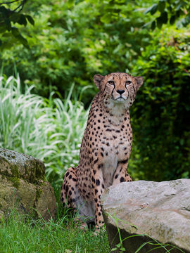 7 Fastest Animals On The Planet