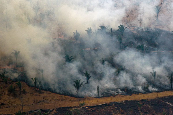 Two-thirds of tropical rainforests destroyed