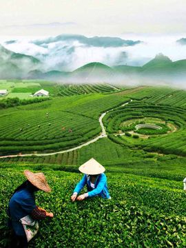 5 Biggest Tea Producing Countries In The World