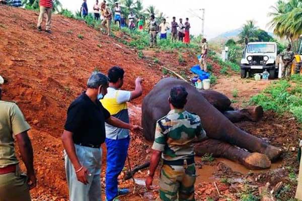 A wild elephant injured by train hit Nawakarai in Tamil Nadu