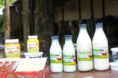 Dairy startup company Puresh Daily