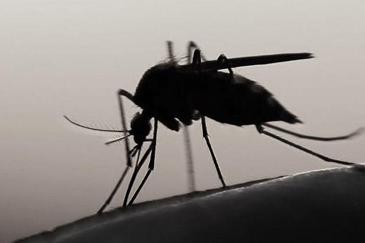 Malaria vaccine by Oxford