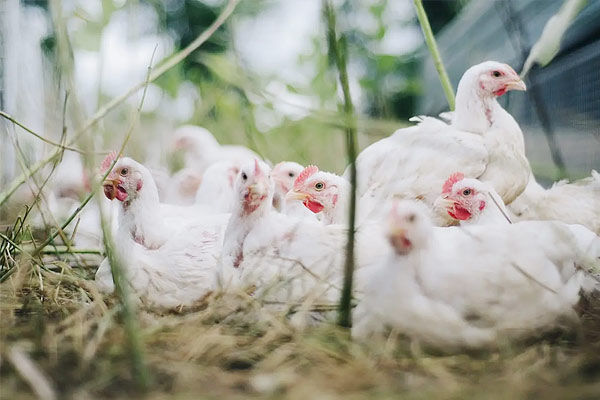 First human infection case of H10N3 bird flu reported in a Chinese province