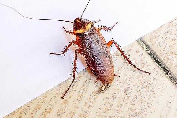 Man takes injured cockroach to vet