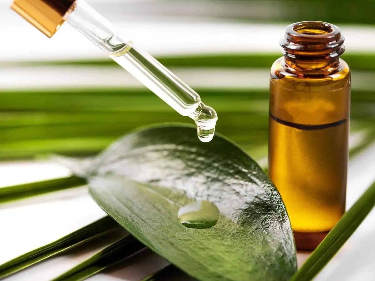 tree tea oil benefits