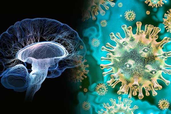 Impact of Covid on brain cells