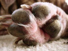 Dogs sweat through their paws