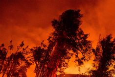 fierce fire in the forests
