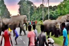 Angry elephant kills young man due to molestation in Assam video goes viral