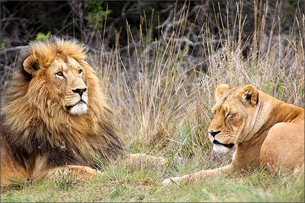 Lions kill 3 children