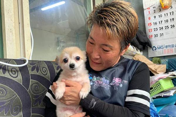 Legal status to animals in South Korea