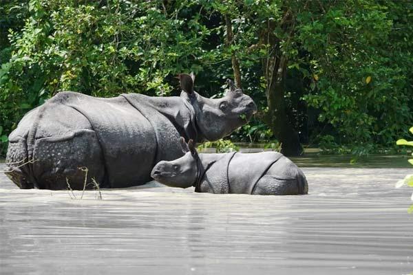 24 animal dead in Assam floods