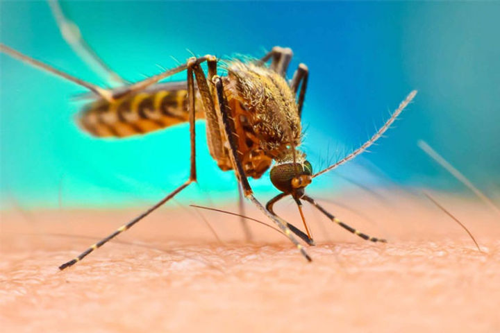 punjab health department said dengue cases increased in the state this year
